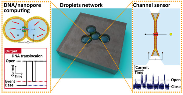 a research on the detection of biological molecules A research group presented a molecular sensor with a microbead format for the rapid in-situ detection of harmful molecules in biological fluids or foods as the sensor is designed to selectively.